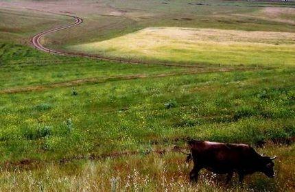 امکان اجاره زمین های کشاورزی برای خارجی ها