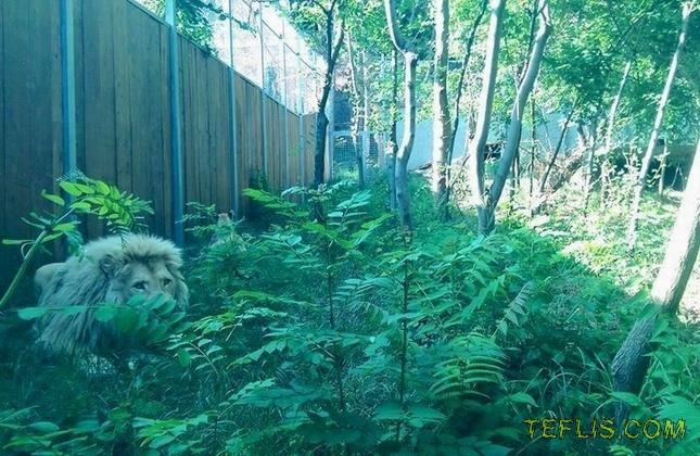 باغ وحشی به وسعت تفلیس