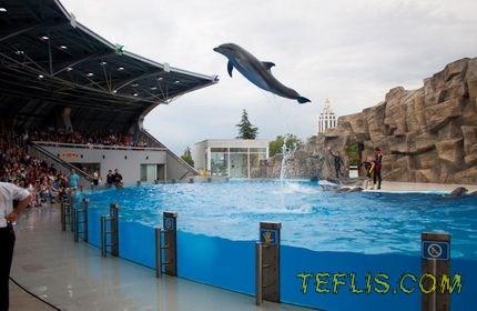 رکورد بی سابقه تعداد بازدیدکنندگان از دلفیناریوم باتومی