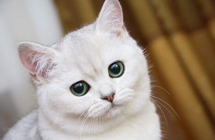 ممنوعیت نگهداری از حیوانات خانگی ثبت نشده در شهر تفلیس